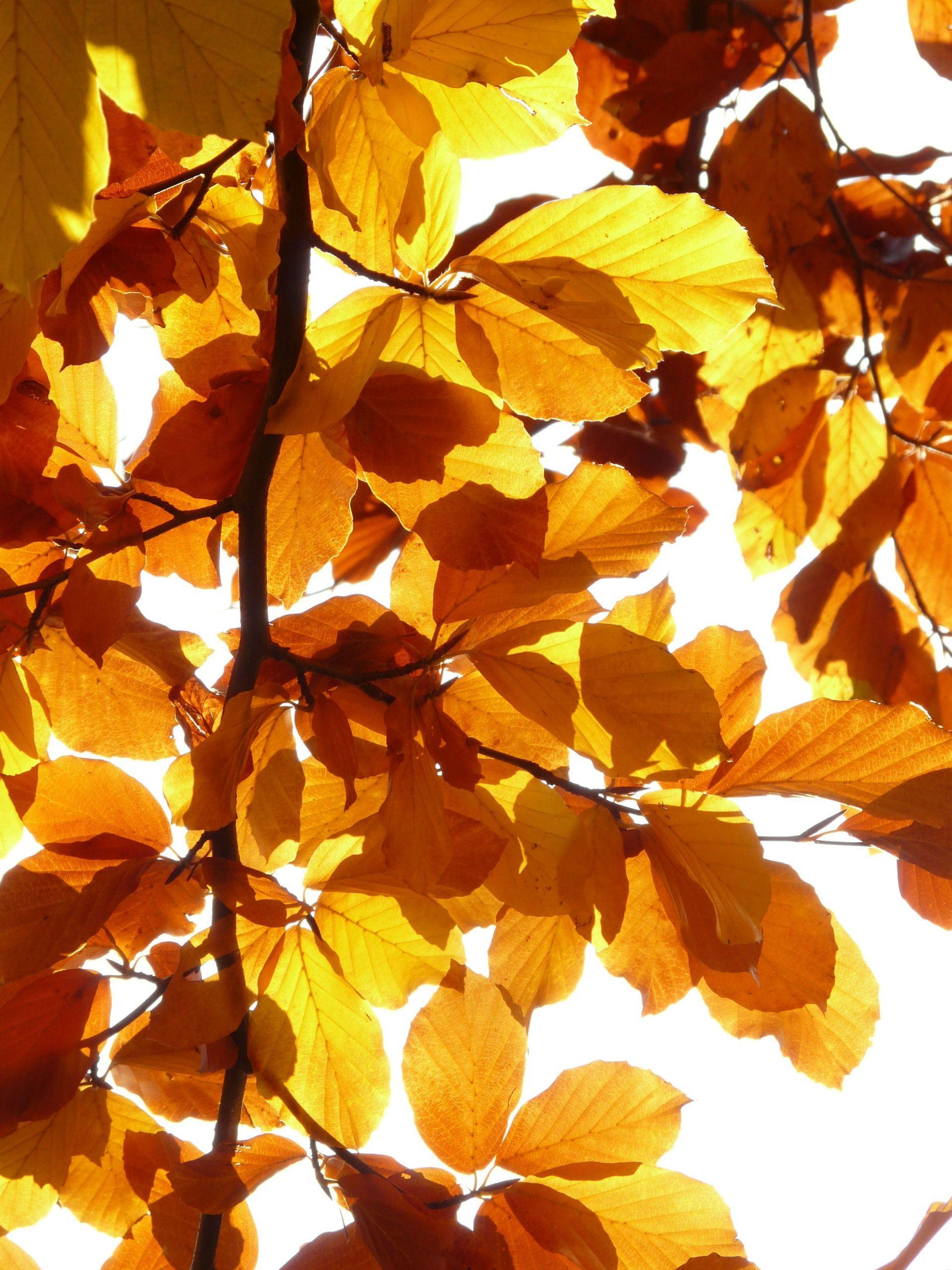 őszi bőrápolás